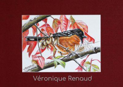 oiseau aux belles couleurs