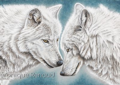 duo de loups blancs