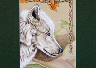 louve blanche de profil