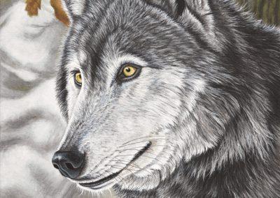 loup gris Ourok