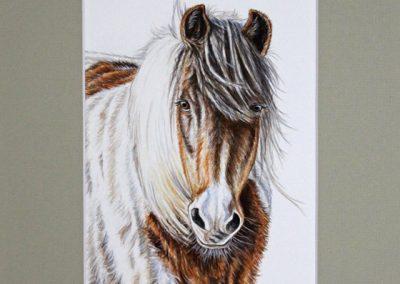 grand poney