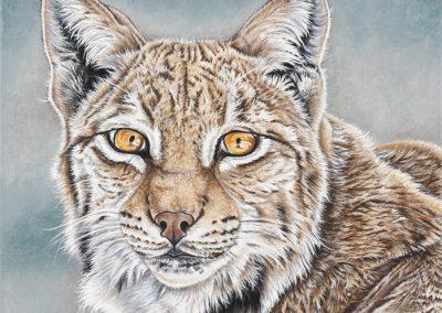 portrait de lynx