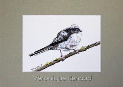 jeune oiseau