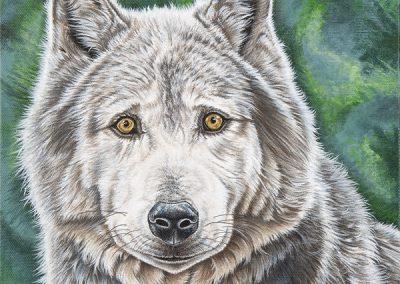 portrait de loup canadien