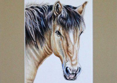portrait de cheval beige