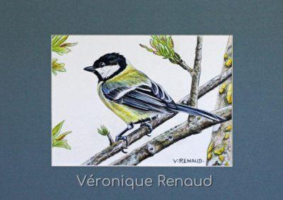 oiseau coloré sur branche printanière