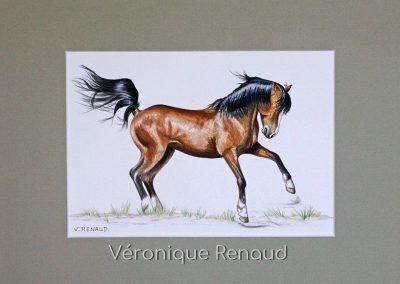 cheval brun fougueux