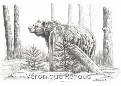 ours en forêt