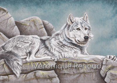 loup gris couché sur les rochers