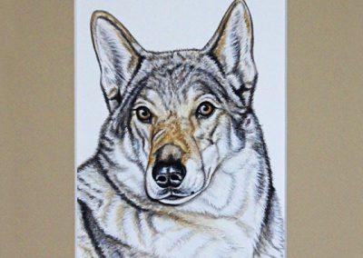 portrait de chien loup