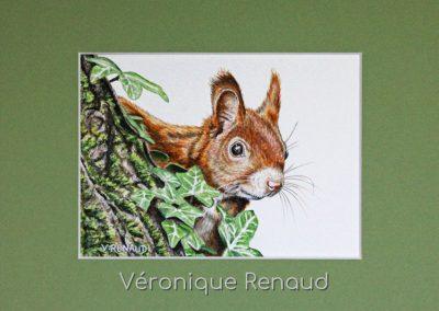 écureuil dans le feuillage