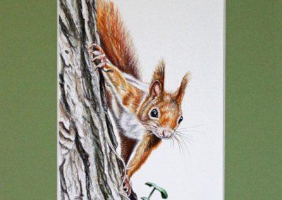 écureuil grimpeur