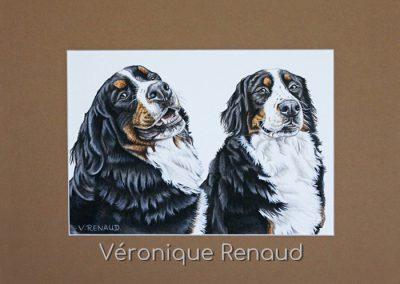 duo de chiens en portrait