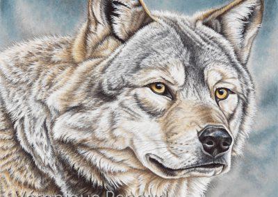 regard de loup de Mongolie