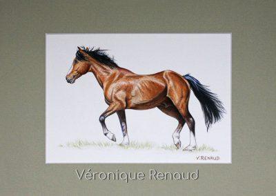cheval brun de profil