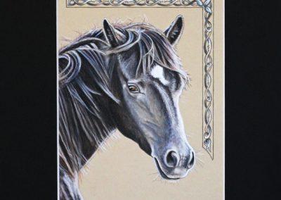 doux regard du cheval noir