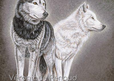 duo de loups sur rochers
