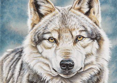 louve grise de Sibérie