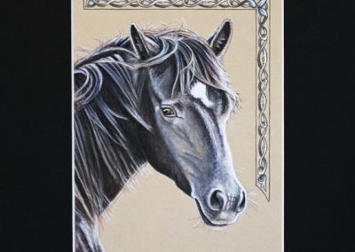 profil de cheval noir
