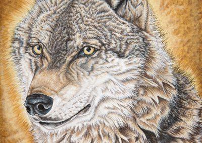 loup gris de Bavière