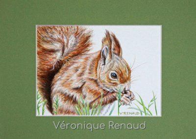 écureuil et noisette