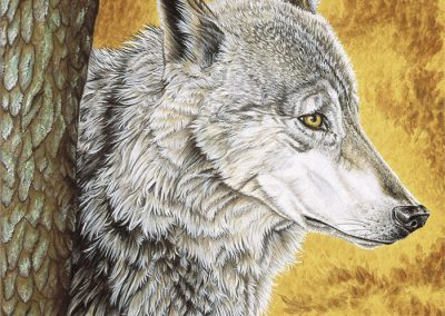 profil de loup en automne