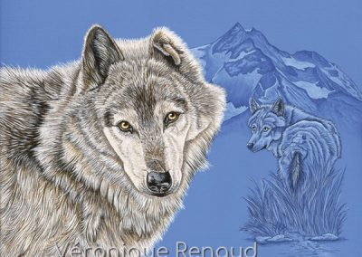 deux loups et montagnes