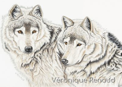 duo de loups gris