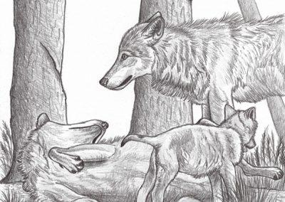 loups et louveteau
