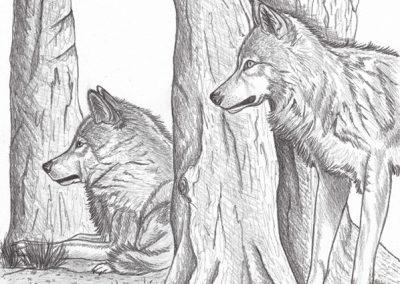 duo de loups dans les arbres