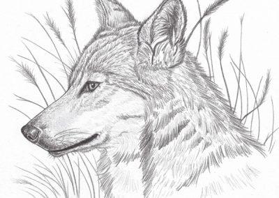 loup de profil