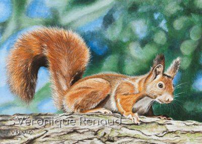 écureuil au soleil